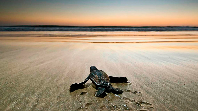 tortugas liberar tortugas